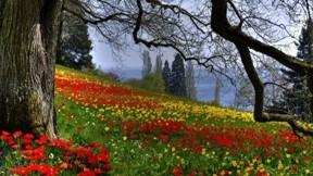 çiçek,ilkbahar,ağaç