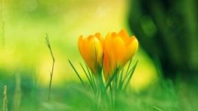 ilkbahar,çiçek,makro,çimen