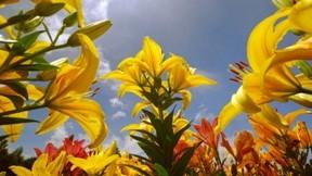 çiçek,ilkbahar