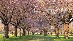 çiçek,ilkbahar,ağaç,yol