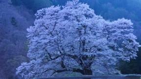 ilkbahar,ağaç,çiçek,akşam,göl