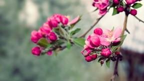 çiçek,ilkbahar,makro
