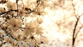 ilkbahar,çiçek,güneş
