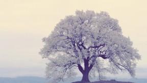 ilkbahar,çiçek,ağaç