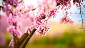 ilkbahar,çiçek,dal,makro