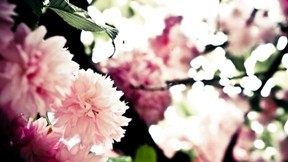 ilkbahar,çiçek,kiraz,dal