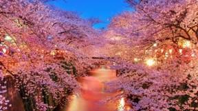 ilkbahar,gece,kanal,ağaç