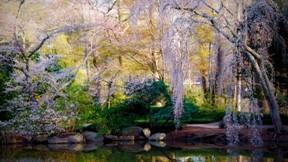 ilkbahar,ağaç,göl,çiçek