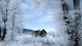 orman,kış,ağaç,ev,kar,doğa
