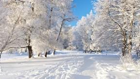 doğa,kar,kış,ağaç,orman,yol