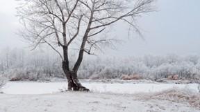kar,ağaç,kış,doğa