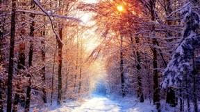 kış,orman, ğaç,kar,güneş,yol
