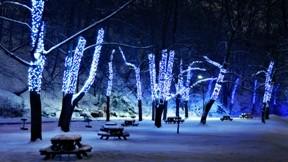 park,ağaç,kış,ışık,gece