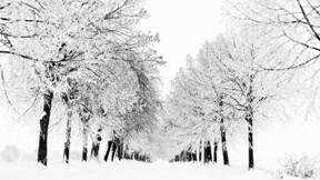 kış,ağaç,doğa,kar,yol