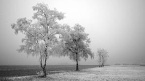 kış,kar,ağaç,doğa