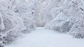kar,kış,ağaç,yol