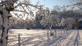 kış,kar,ağaç,ev,güneş,gökyüzü
