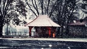 kış,kar,ağaç,yol