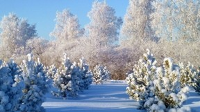 kar,dağ,kış,güneş,ağaç
