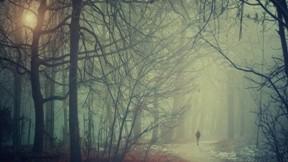 sis,kış,kar,orman,yol,güneş