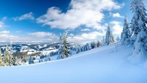kış,ağaç,dağ,yamaç,orman