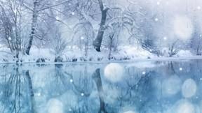 kış,nehir,kar,orman,ağaç