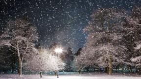 kış,gece,kar,ağaç