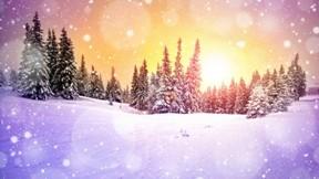 kış,kar,doğa,ağaç