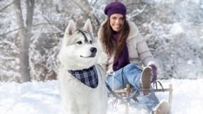 kar,kış,köpek,ağaç