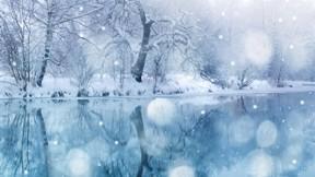 kış,göl,kar,ağaç