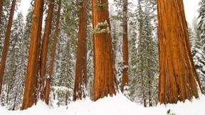 kış,orman,kar,ağaç
