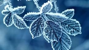 kış,kar,yaprak