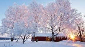 kış,kar,ağaç,güneş,doğa
