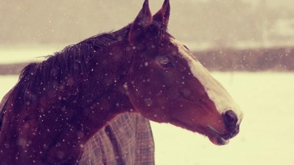 Kışın At