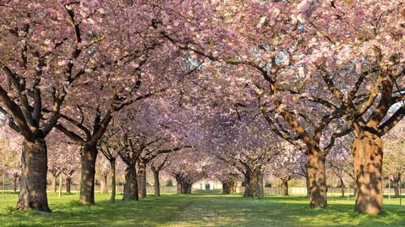 Bahar Manzarası