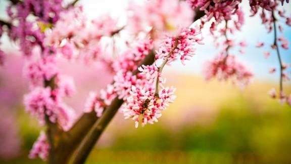 İlkbahar Çiçekleri
