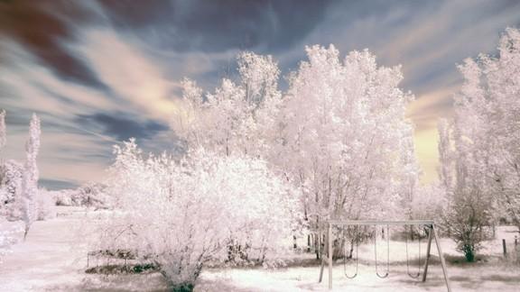 Karlı Ağaçlar