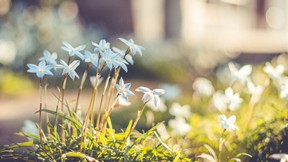 doğa,çiçek,füneş