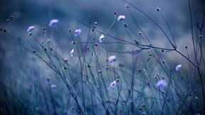 doğa,çiçek,dal