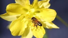 doğa,çiçek,arı,balarısı,hayvan,böcek