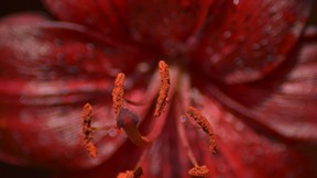 doğa,çiçek,makro