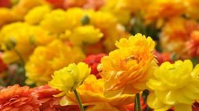 çiçek,sonbahar