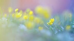 doğa,çiçek,flu