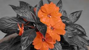 doğa,çiçek
