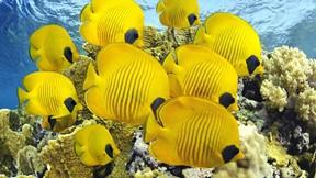 tropikal,balık,deniz,resif