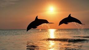 deniz,günbatımı,yunus,deniz