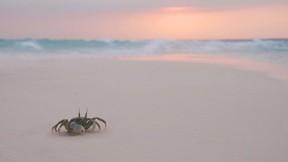 deniz,kumsal,yengeç