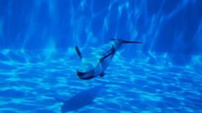 havuz,yunus,balık