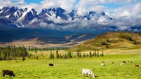 inek,doğa,çimen,güneş,dağ