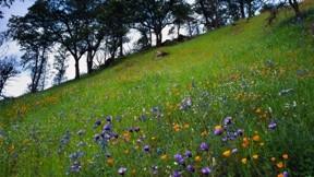 ilkbahar,çiçek,dağ,ağaç,çimen